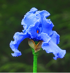 Bearded Iris 3-D Pattern